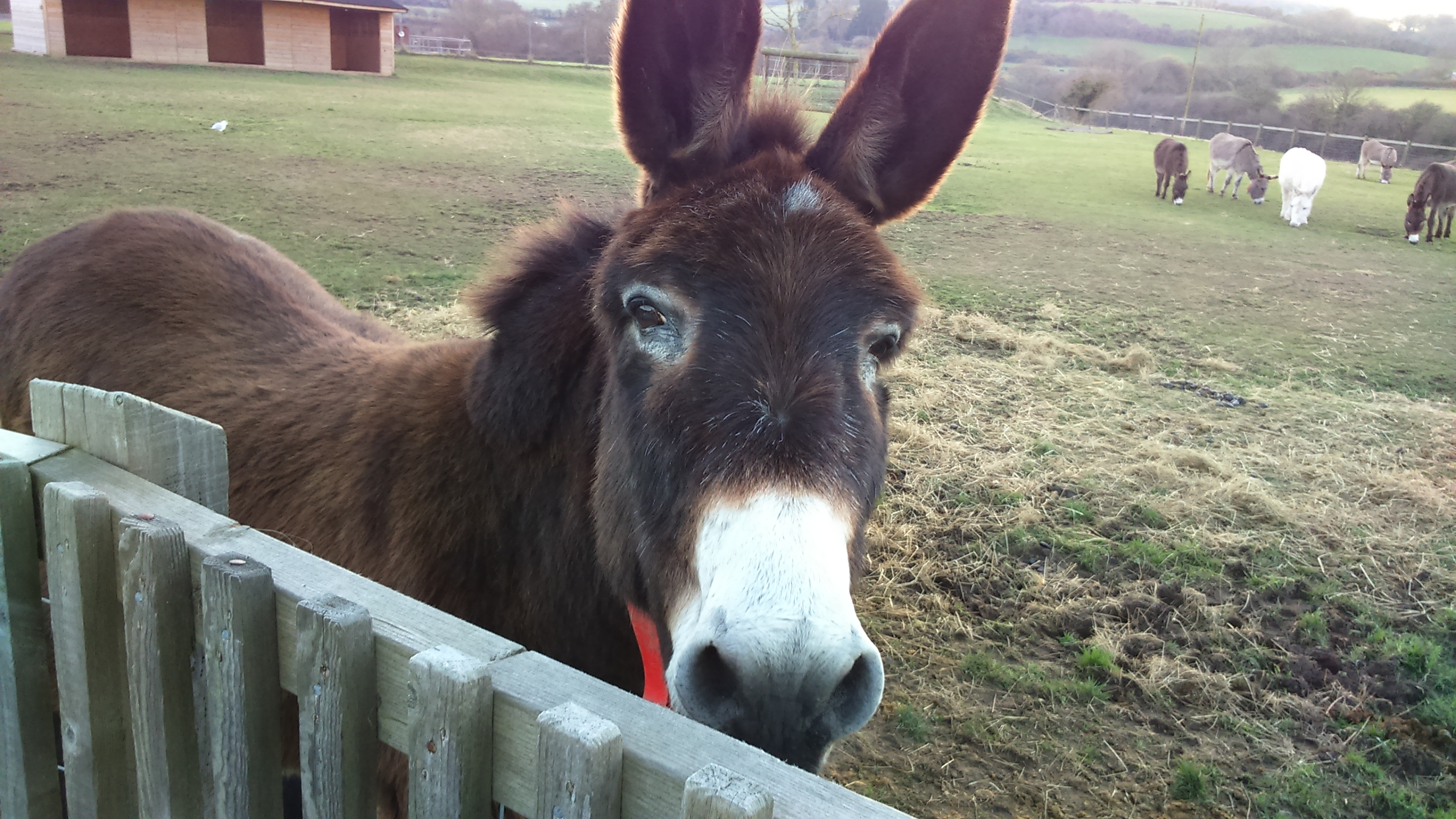 Busby the Donkey at the Isle of Wight Donkey Sanctuary